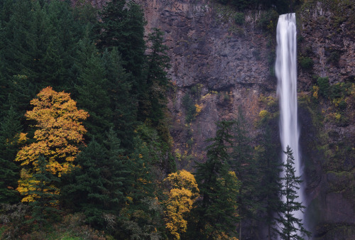 My beautiful home state  hingsoregon:  Multnomah Falls Photo credit: John Behrends