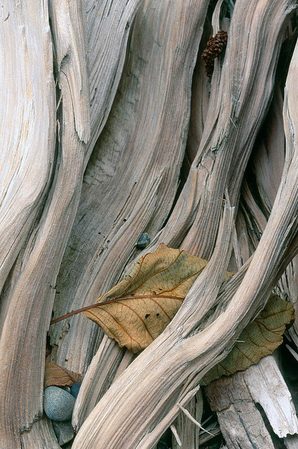 elemenop:  76375 Caught leaf (by James R. Page)