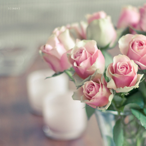 I'd rather have roses on my table than diamonds on my neck. - Emma Goldman - myprimary:on the table (by {cindy})