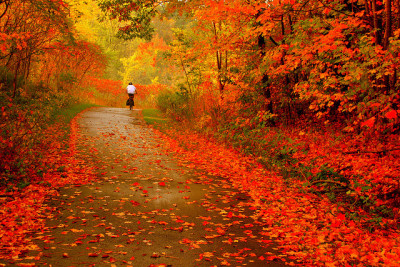 theworldwelivein:  Autumn Ride ! (by Ming chai)