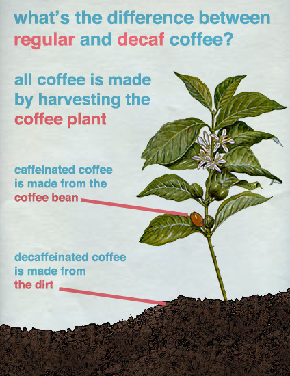 What's The Difference Between Regular and Decaf Coffee?