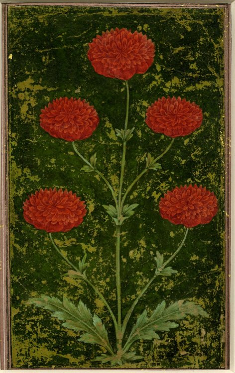 antiquememes:  Date: 1651-1750 (circa) Schools /Styles: Mughal Style Period/Culture: Islamic Description: Painting. Flower. On paper.