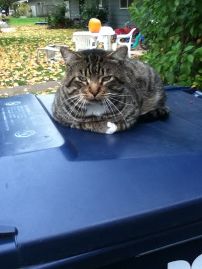Box Cat.  His interests are laying on recycling bins and motorized vehicles. He's a good listener, he meows at everything you say.  This cat always has a response. He is the enemy of my very own cat, the two fight for the pile of dirt to lay on.