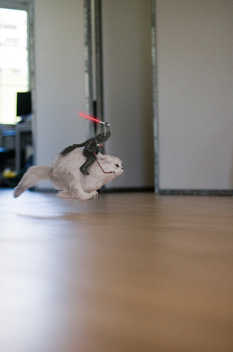 Darth on a cat