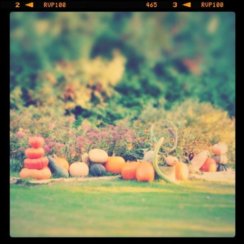 Pumpkins & Gourds - Door County, Wisconsin - Edited with Tilt Shift Generator & Instagram