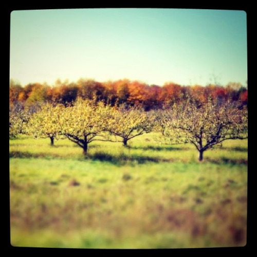 Orchard - Door County, Wisconsin - Taken with D90, edited with Tilt Shift Generator and Instagram.