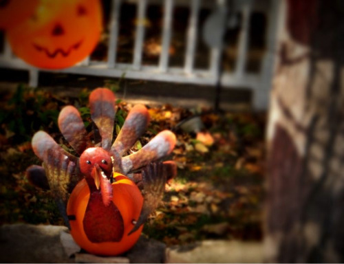Turkey Pumpkin - Door County, Wisconsin - Taken with D90 - Edited with Tilt Shift Generator. It's tumblr Tuesday - If you like my photography please recommend me by clicking here.
