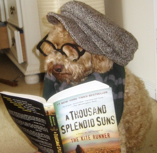 "hipsterpuppies:  penny fears kindles because ""then how are people going to know what you're reading?"" [via kaitlyn k]"