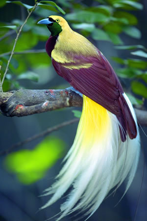 Bird of Paradise…   via www.regione.piemonte.it