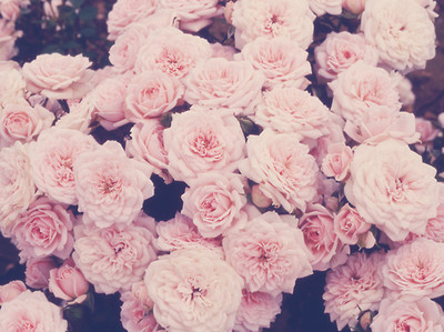 I want to be given a bunch of flowers more than anything.