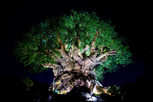 AK Tree of Life Night 24 by *Disney-Stock