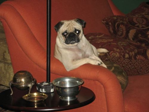 hipsterpuppies:  take a seat and let meatball tell you about the work of slavoj žižek [via cara p]