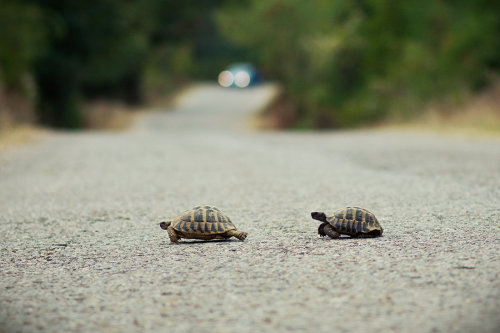 Run turtle, run for your life by ~mario19 on deviantART