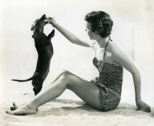 Dachshund Eating A Treat (Vintage Photo) nadiabean:  I miss this.