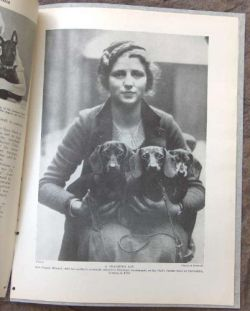 Vintage Trio Of Dachshunds nadiabean: