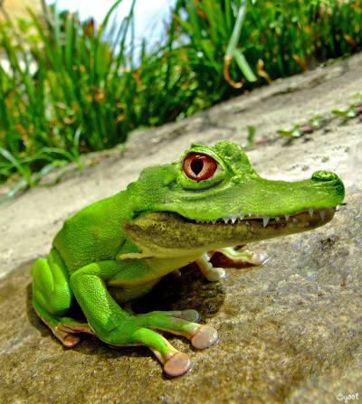 "Photo manipulation trying to create new animals: frog + crocodile= ""frogodile"""