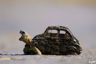 "Photo manipulation turtle + volkswagen = ""turtswagen"""