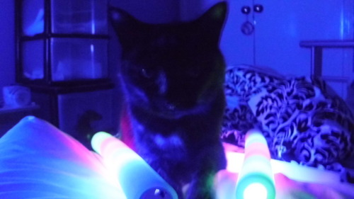Cat and glowing awesomeness
