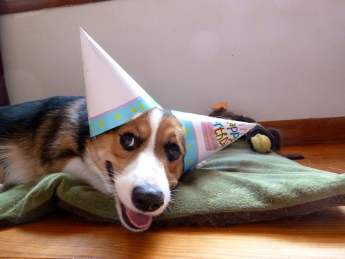 even better than one birthday hat… TWO birthday hats. help protect the ears. this is little alwyn pwned by jessie