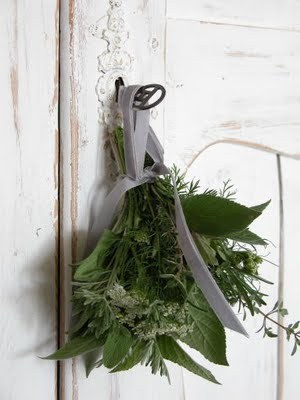 source: French Larkspur ~ simple and pretty idea