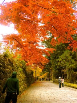 Nikko, Japan.  These leaves were WIIIILD.