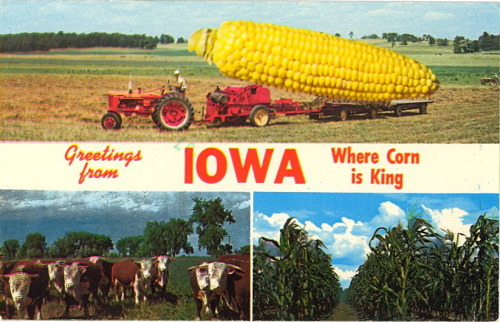 "bad-postcards:  GREETINGS FROM IOWA WHERE CORN IS KING Greetings from BAD POSTCARDS where CORNY is king.  I'm 98% sure this is still being sold at Hy-Vee customer service counters across the state. Also I wish to stress that I in no way think this is a ""bad postcard."""