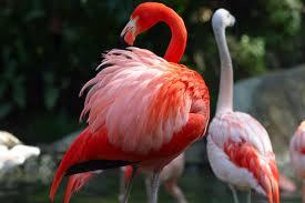 Flamingo The Fancy Bird  Once a Bird Always a Bird Cuffin Dont Change That!