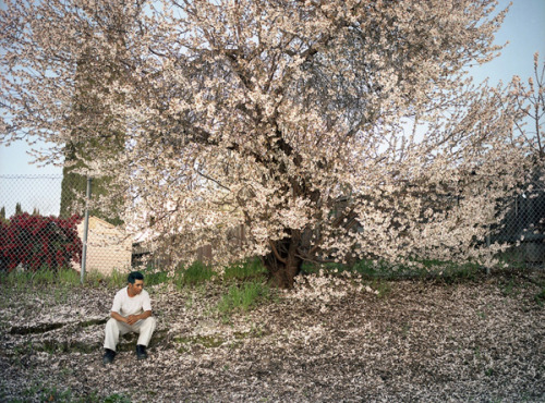 Larry Sultan, Blooming in Antioch, 2008