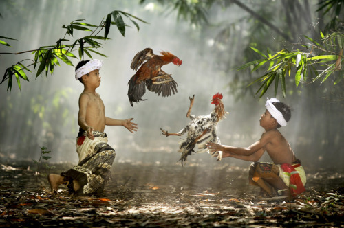 Suradita Village, West Java, Indonesia. Children playing with their roosters. Actually it was not a real cockfight because the roosters didn't wear blades on their feet. Children like to play this game because they almost never have toys in their life. (Photo and caption by Ario Wibisono)  _____  Alan Taylor did a brilliant job curating the National Geographic Photo Contest on the Big Picture blog. Stunned by the images! This one is my favorite.