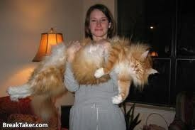 THAT IS ONE BIG kitty