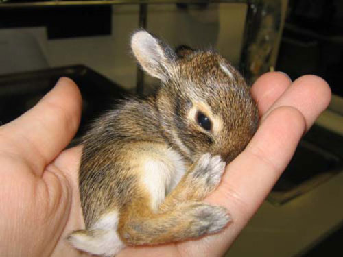 "Baby bunny in Salon's ""Baby animals: Your election antidote"" slideshow."