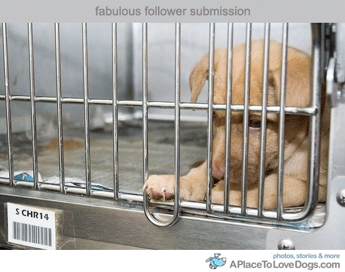 Submitted by countthecolors: The Animal Rescue Site is having trouble getting enough people to click on it daily so they can meet their quota of getting FREE FOOD donated everyday to abused and neglected animals in their shelters. It takes less than a minute (only about 15 seconds actually) to go to their site and click on the purple box titled, 'ClickHeretoGive - it's FREE!'. Every click gives about .6 bowls of food to sheltered dogs. You can also click daily! Keep in mind that this does not cost you a thing. Their corporate sponsors/advertisers use the number of daily visits to donate food to abandoned/neglected animals in exchange for advertising. Go to the web site: http://www.theanimalrescuesite.com/clickToGive/home.faces?siteId=3 Thankyou:)