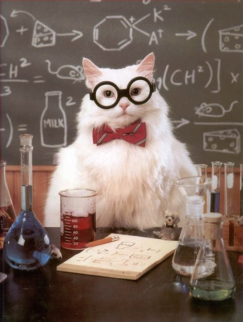 This cat is a scientist, your argument is invalid.