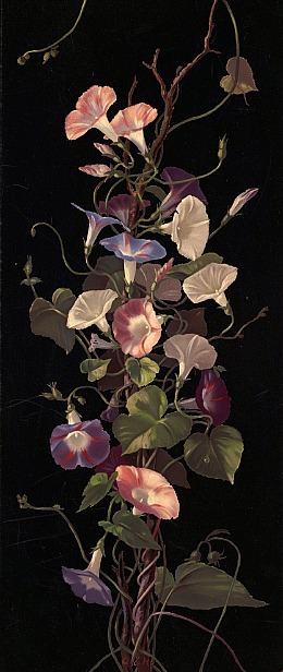 indigodreams:  Morning Glories Hardy, Annie Eliza, 1839-1934