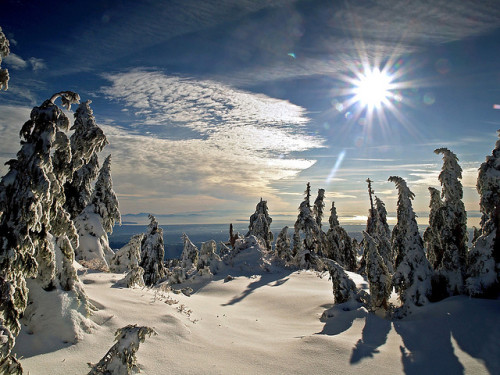 Early Winter Sun by Christopher J. Morley
