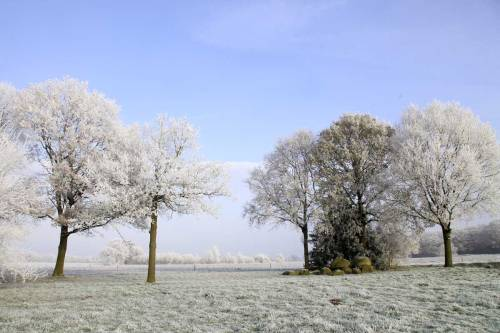 Signs of winter. Westervelde, Netherlands this morning