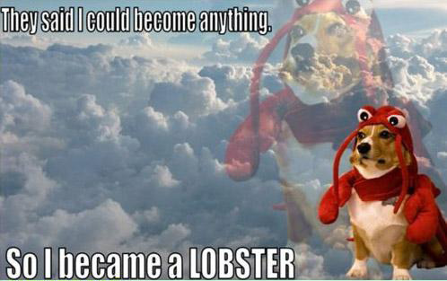 They said I could become anything… so I became a lobster.