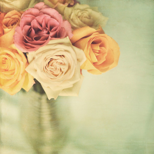 wallcakes2u:  R O S E S (by Shana Rae {Florabella Collection})