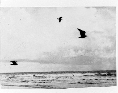 Gulls and Clouds, By the Wind,1941 by Anne Brigman from George Eastman House