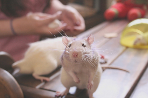 "sixohthree:  Impossible not to say ""Aaaaaw"" :) (by Melina Souza)"