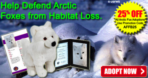 "Defenders of Wildlife is having a sale on arctic fox adoption. I thought this was really funny and then I was like, ""Damn, Megan Rascal! This is sad not funny!"" But still, I love a sale. I also love Defenders of Wildlife. According to them, the arctic fox is a ""prime target"" for the fur trade. Bastard fur-wearers! Arctic foxes are also in danger because of red foxes taking over as top predator in their hood but I don't know what to do about that? [Picture from the Defenders of Wildlife facebook page]"