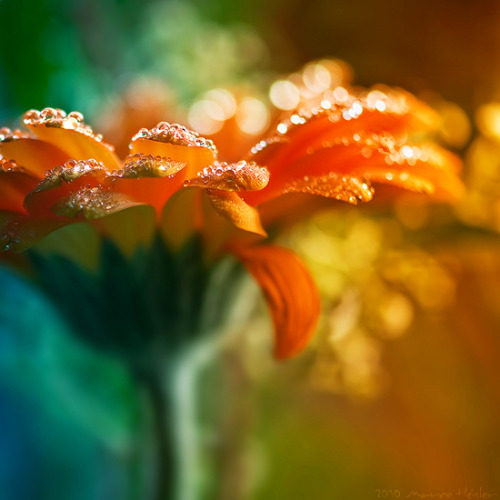 dewdrops sofrickinawesome:via www.beautifullife.info