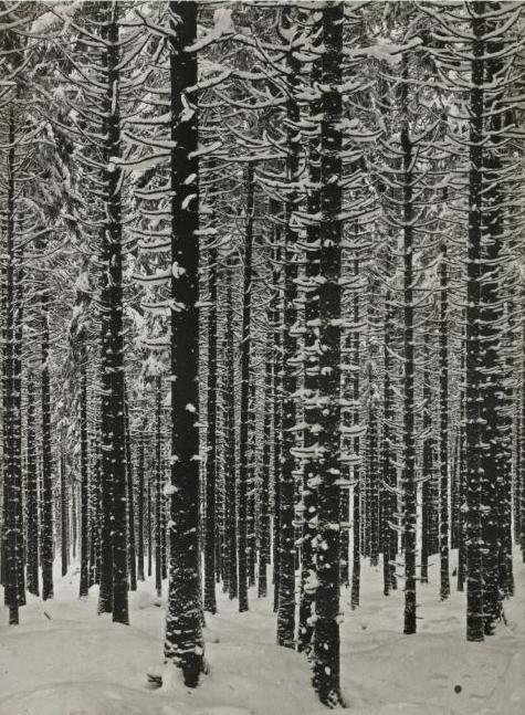 arsvitaest:  Albert Renger-Patzsch, Mountain Forest in Winter, 1926