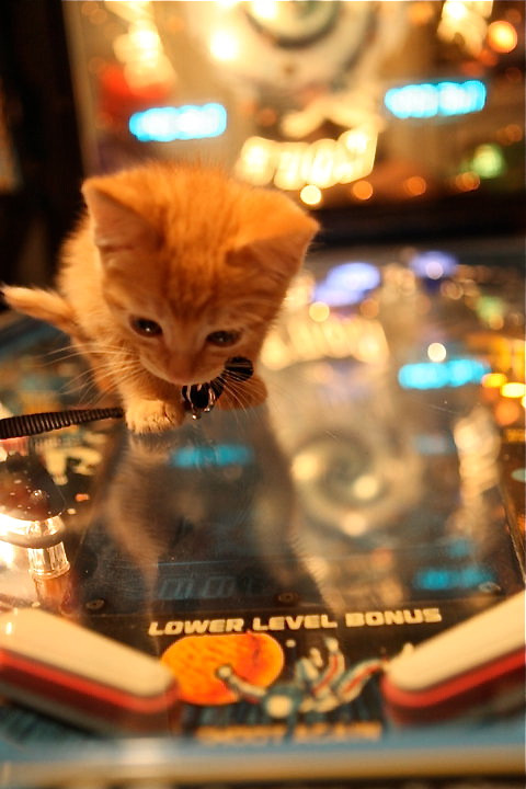 This is Tiberius, who lives with Sonni! Do not challenge his pinball score.