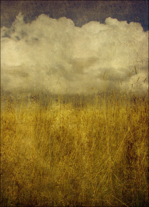eyecandyforthesore:  The Midst of Grasses by Stuart Lee (3a.m. from Kyoto)