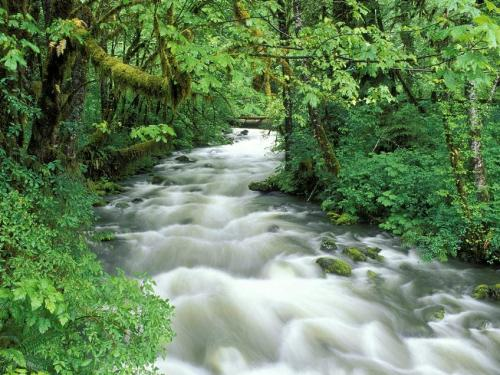 Cannings Creek at the Olympic National Park, Washington