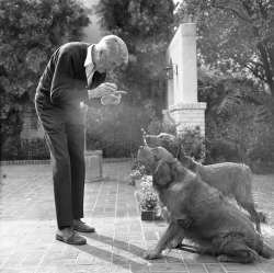 mattybing1025:  James Stewart and his dogs c. 1971  Dammit I just love a man who wears Bucks!
