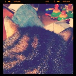 Whiskey at my side, cat on lap. (Taken with instagram)