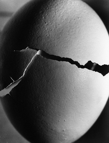 Burton Pritzker Chicken Egg [Artifacts] 2004, April   Gelatin silver print Provided by the artist - Burton Pritzker