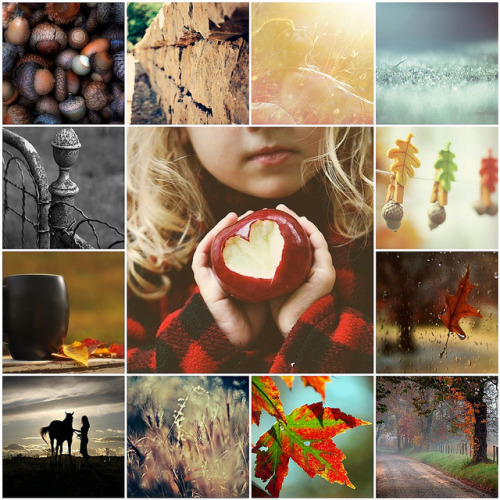 [Things I ♥ Thursday] Autumn is here (by Francesca Leysen)  So Pretty.